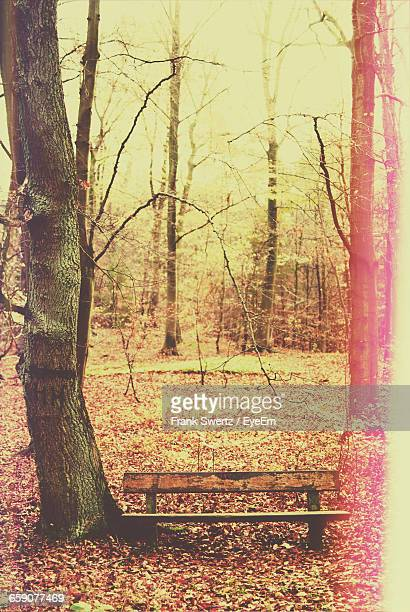 empty bench by trees in forest - frank swertz stock pictures, royalty-free photos & images