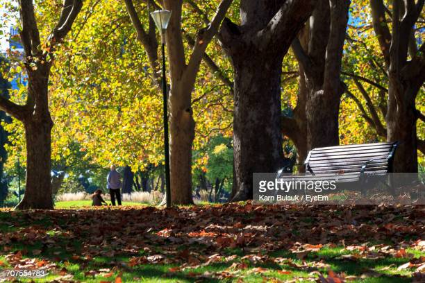 Empty Bench By Trees In Park During Autumn