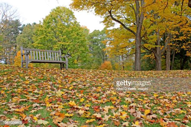 empty bench in autumn - wellesley massachusetts stock pictures, royalty-free photos & images