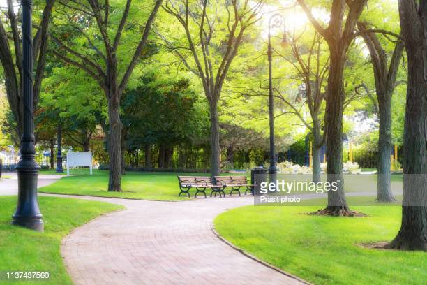 empty bench in green park and sky with sun light, green park outdoor - public park stock pictures, royalty-free photos & images