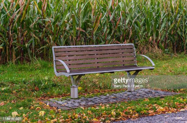 empty bench in park - barry wood stock pictures, royalty-free photos & images
