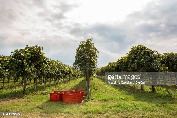 empty bench on field by trees against sky - massimo cavallari stock pictures, royalty-free photos & images