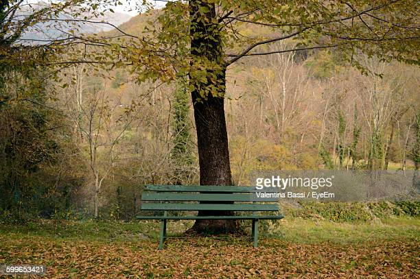 Empty Bench On Field During Autumn