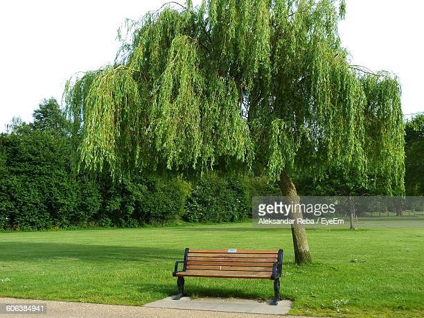 empty bench on grassy field in park - park bench stock pictures, royalty-free photos & images