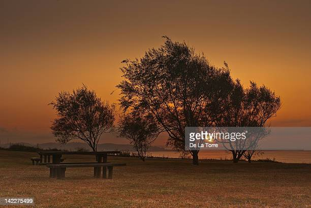 empty benches and trees at sunset - gijon stock pictures, royalty-free photos & images