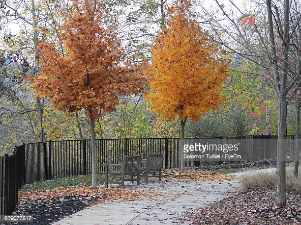 empty benches by autumn trees at park - solomon turkel stock pictures, royalty-free photos & images