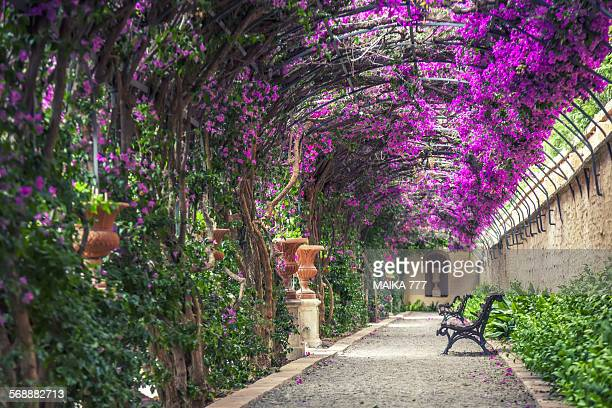 empty benches on tunnel - shaped pergola in garden - valencia spanje stockfoto's en -beelden
