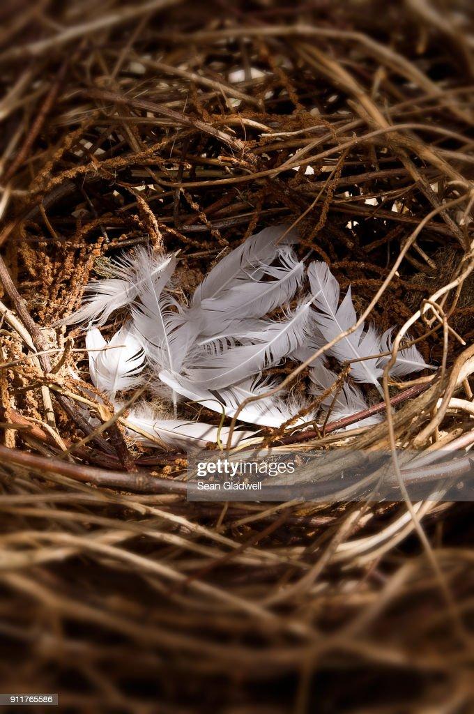 Empty bird nest : Stock Photo
