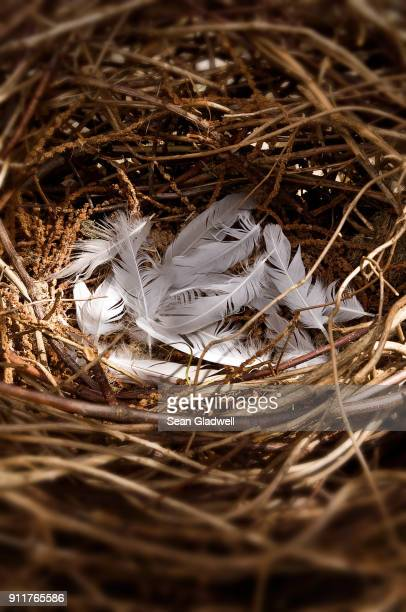 empty bird nest - bird's nest stock photos and pictures