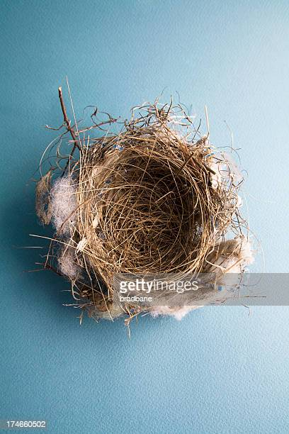 Empty Bird's Nest On Blue