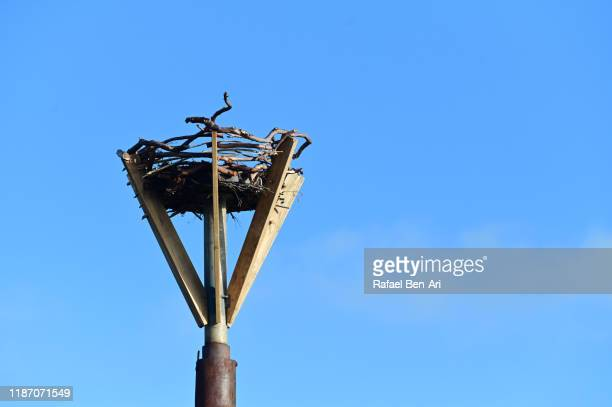 empty birds nest - rafael ben ari stock pictures, royalty-free photos & images