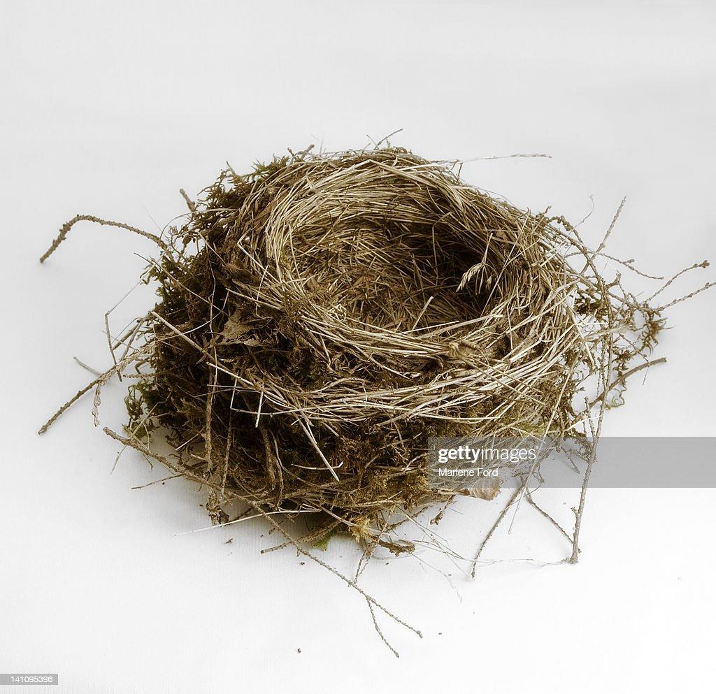 Empty bird's nest : Photo