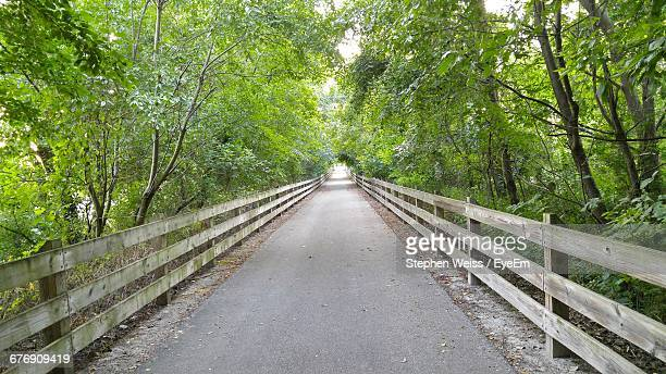 Empty Bridge Amidst Trees