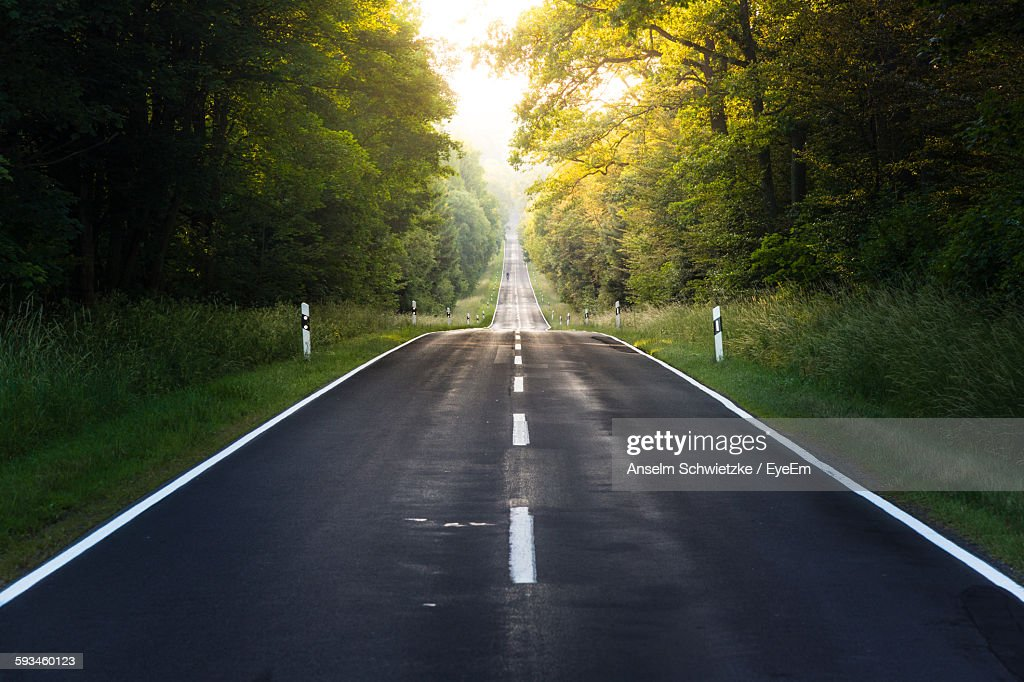 Empty Country Road Amidst Trees : Stock Photo