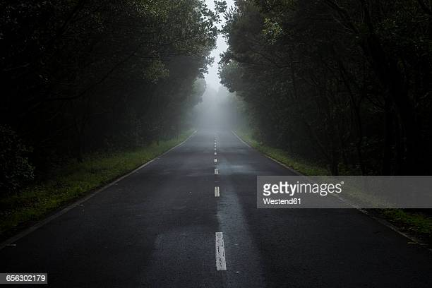 empty country road in the fog - ominous stock pictures, royalty-free photos & images