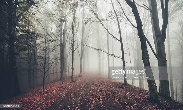 Empty Dirt Road Covered With Petals Amidst Bare Trees During Foggy Weather