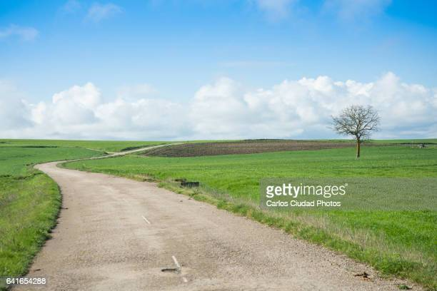 Empty dirt road in an agricultural landscape against blue sky