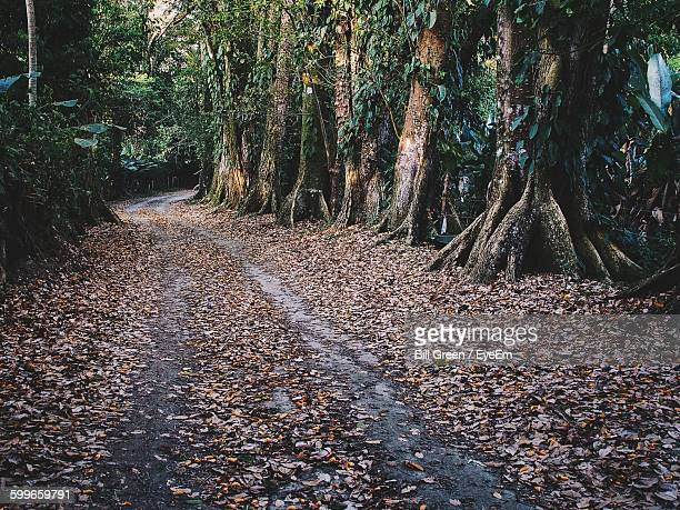 Empty Dirt Road In Forest