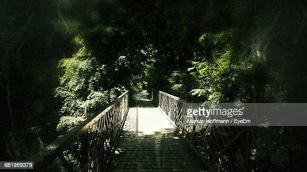 Empty Footbridge Amidst Trees In Forest