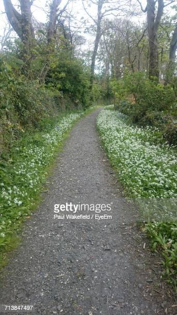 empty footpath along trees - forens stock pictures, royalty-free photos & images
