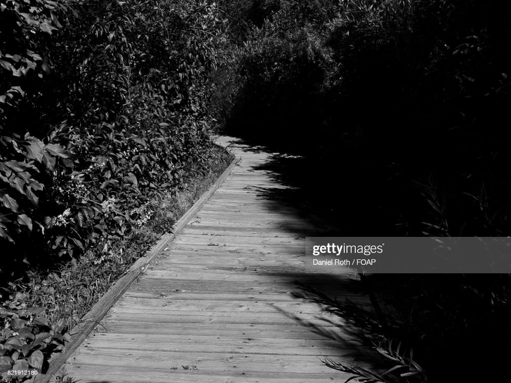 Empty footpath along with plants : Stock Photo