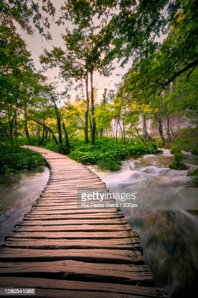 empty footpath amidst trees in forest - água stock pictures, royalty-free photos & images