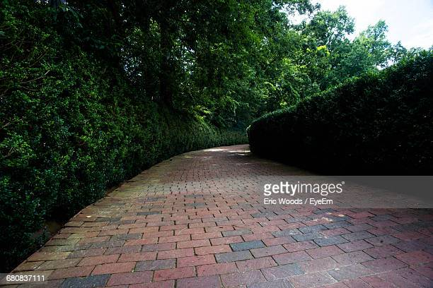 Empty Footpath By Trees At Park