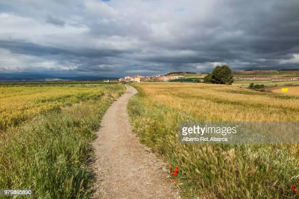 empty footpath in field, viana, navarra, spain - camino de santiago stock pictures, royalty-free photos & images
