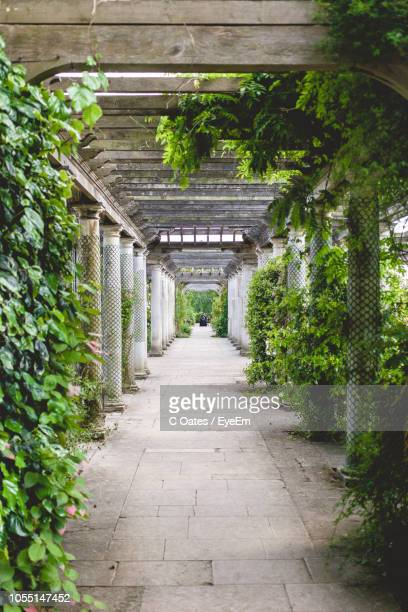 empty footpath in park - hampstead heath stock pictures, royalty-free photos & images