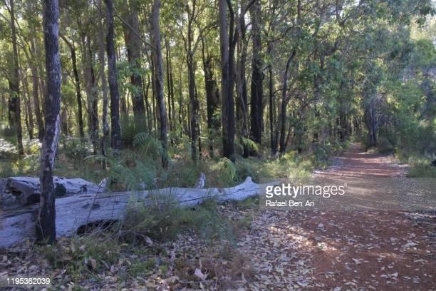 empty footpath in the woods - rafael ben ari 個照片及圖片檔