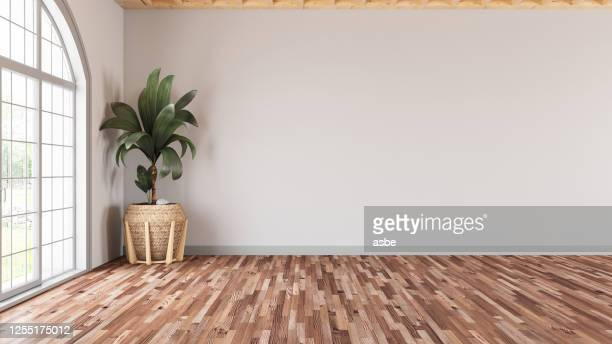 sala de estar moderna vazia com parede branca e planta - ninguém - fotografias e filmes do acervo