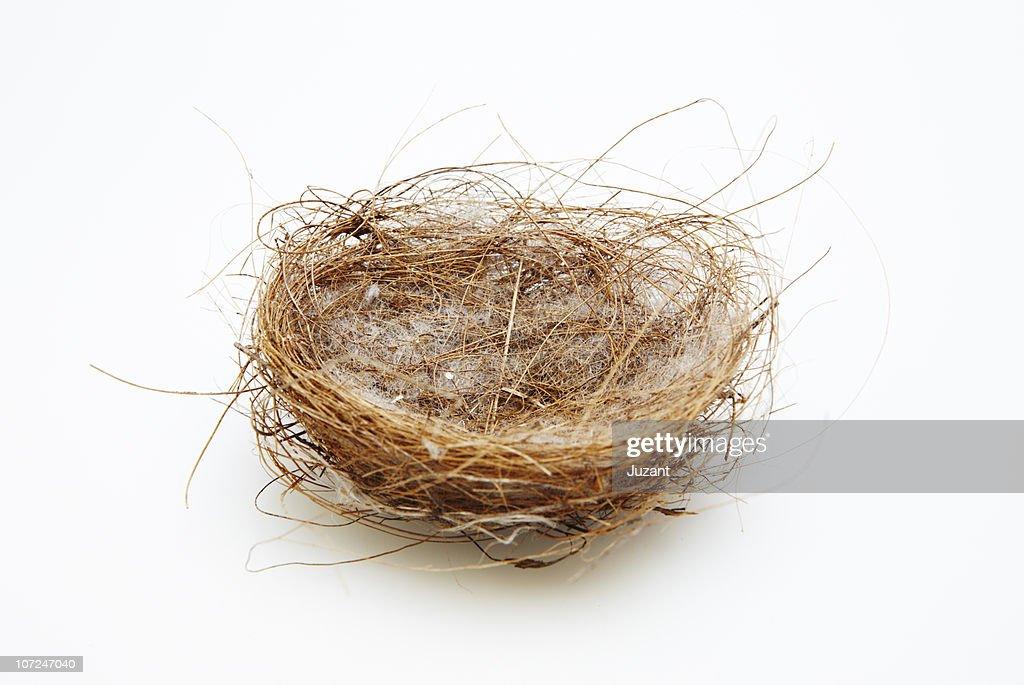 Empty Nest : Stock Photo