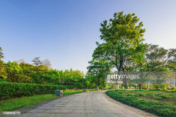 empty park at dawn, china - image stockfoto's en -beelden