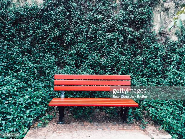 empty park bench against ivy - park bench stock pictures, royalty-free photos & images
