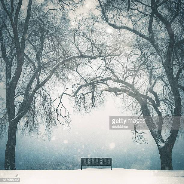 Empty Park Bench In Winter Scenic With Tall Bare Trees