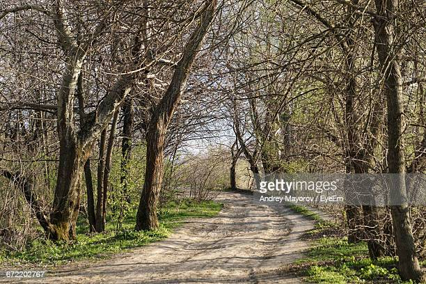 Empty Pathway Along Trees In Forest
