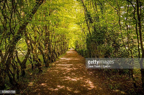 empty pathway along trees in the forest - narrow stock pictures, royalty-free photos & images