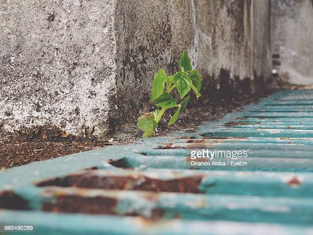 empty patterned footpath by wall - file:the_wyoming,_orlando,_fl.jpg stock pictures, royalty-free photos & images