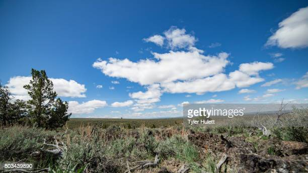 empty plain on steens mountain 1 - western juniper tree stock pictures, royalty-free photos & images