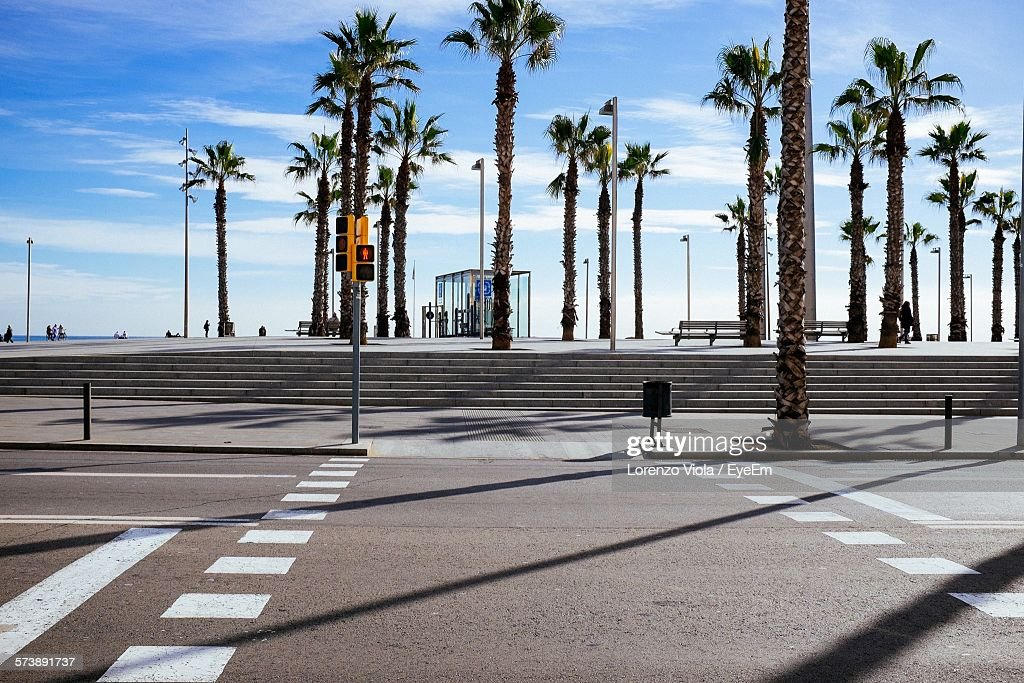 Empty Road Against Palm Trees : Stock Photo