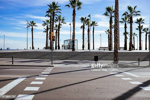 Empty Road Against Palm Trees