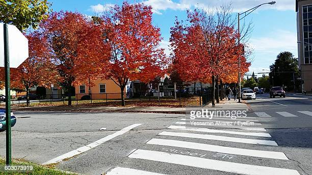 Empty Road Along Autumnal Trees