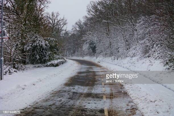 empty road along bare trees during winter,wageningen,gelderand,netherlands - weg fotografías e imágenes de stock