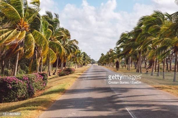empty road along plants and trees against sky - bortes stock pictures, royalty-free photos & images