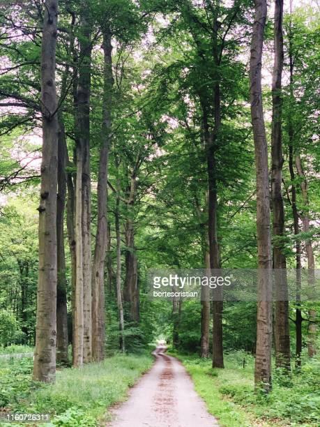 empty road along trees in forest - bortes - fotografias e filmes do acervo
