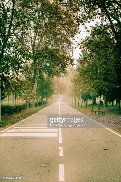 empty road along trees - monza stock pictures, royalty-free photos & images