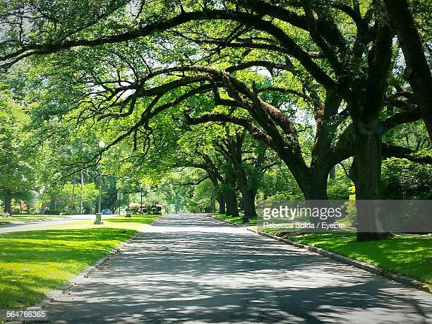 empty road along trees - shreveport stock pictures, royalty-free photos & images