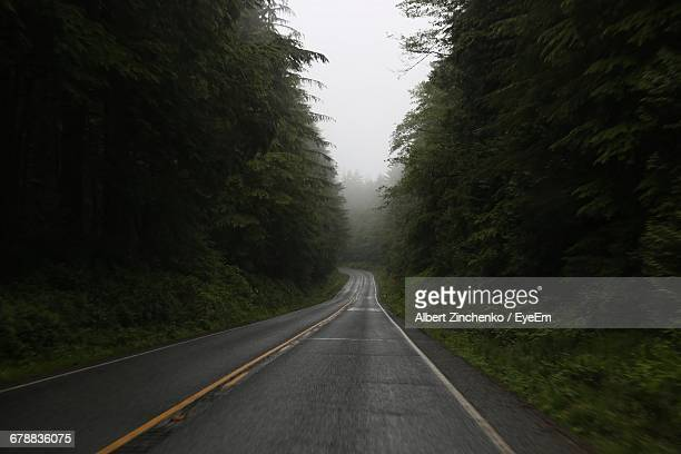 empty road along trees - zinchenko stock pictures, royalty-free photos & images