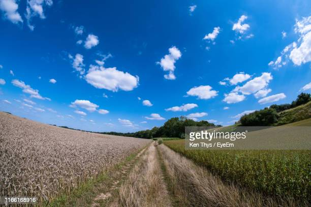 empty road amidst agricultural field against sky - 魚眼撮影 ストックフォトと画像