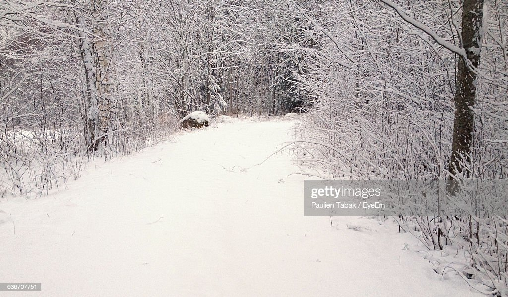 Empty Road Amidst Frozen Trees On Field During Winter : Stockfoto